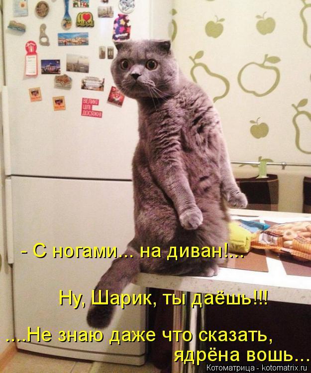 Котоматрица: Ну, Шарик, ты даёшь!!! ....Не знаю даже что сказать, ядрёна вошь....  - С ногами... на диван!...