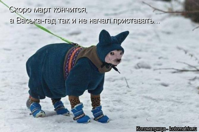 Котоматрица: Скоро март кончится, а Васька-гад так и не начал приставать...