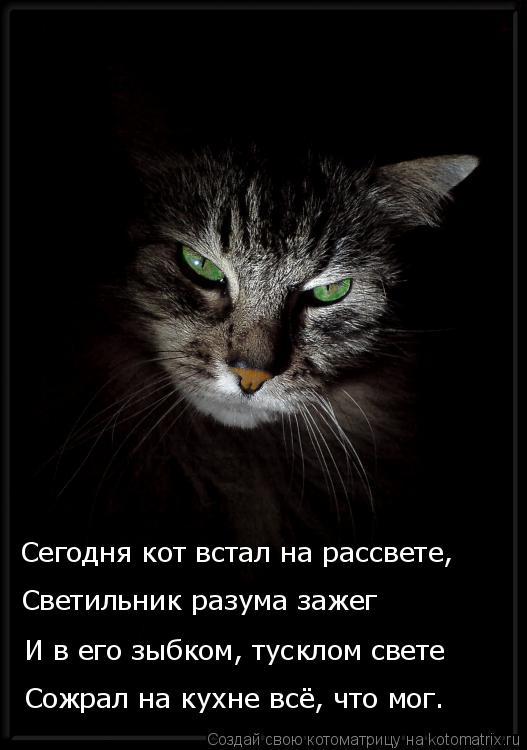 Котоматрица: Сожрал на кухне всё, что мог. И в его зыбком, тусклом свете Светильник разума зажег Сегодня кот встал на рассвете,