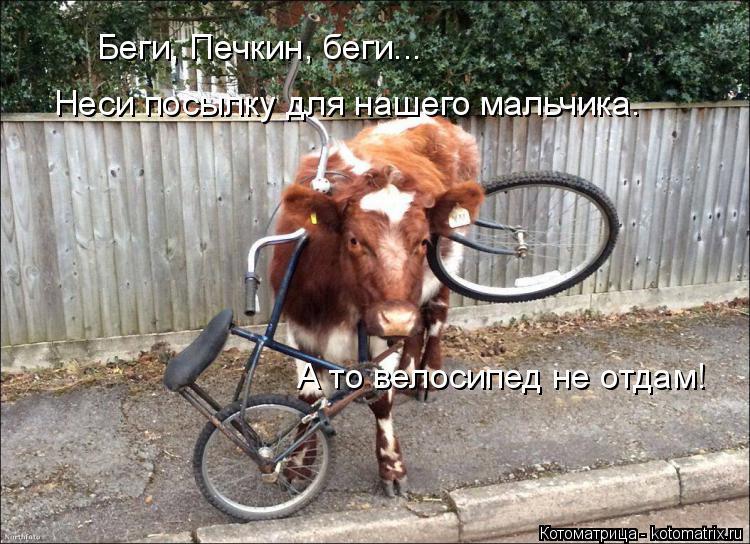 Котоматрица: Беги, Печкин, беги... Неси посылку для нашего мальчика. А то велосипед не отдам!