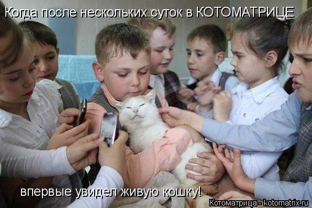 Котоматрица: Когда после нескольких суток в КОТОМАТРИЦЕ впервые увидел живую кошку!