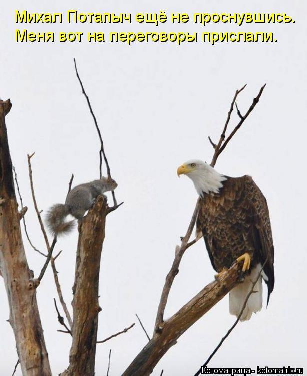 Котоматрица: Михал Потапыч ещё не проснувшись. Меня вот на переговоры прислали.