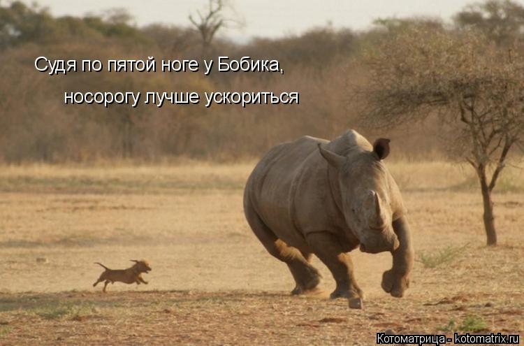 Котоматрица: Судя по пятой ноге у Бобика, носорогу лучше ускориться Судя по пятой ноге у Бобика, носорогу лучше ускориться
