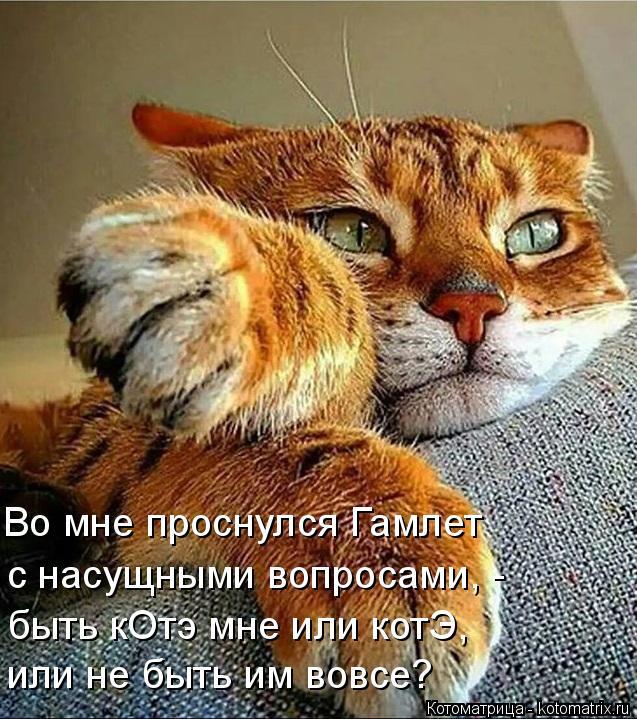 Котоматрица: или не быть им вовсе? быть кОтэ мне или котЭ, с насущными вопросами, -  Во мне проснулся Гамлет