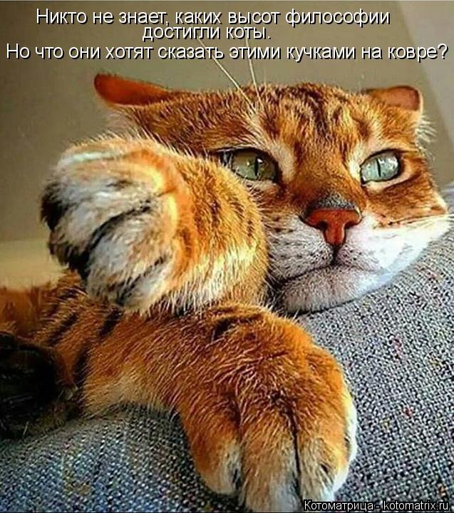 Котоматрица: Никто не знает, каких высот философии достигли коты. Но что они хотят сказать этими кучками на ковре?