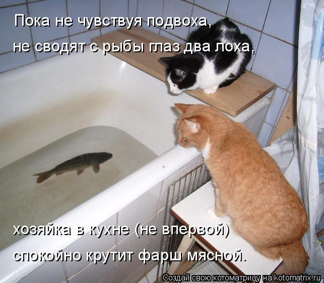 Котоматрица: Пока не чувствуя подвоха, не сводят с рыбы глаз два лоха, хозяйка в кухне (не впервой) спокойно крутит фарш мясной.