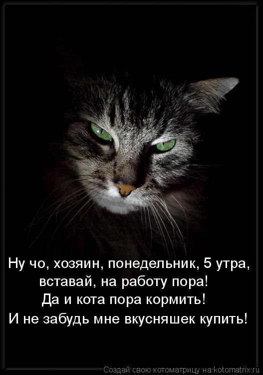 Котоматрица: Ну чо, хозяин, понедельник, 5 утра, вставай, на работу пора! Да и кота пора кормить! И не забудь мне вкусняшек купить!