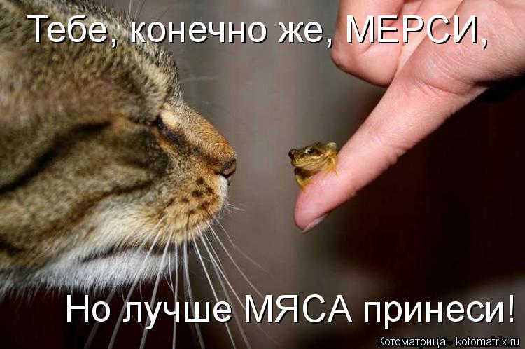 Котоматрица: Тебе, конечно же, МЕРС�, Но лучше МЯСА принеси!