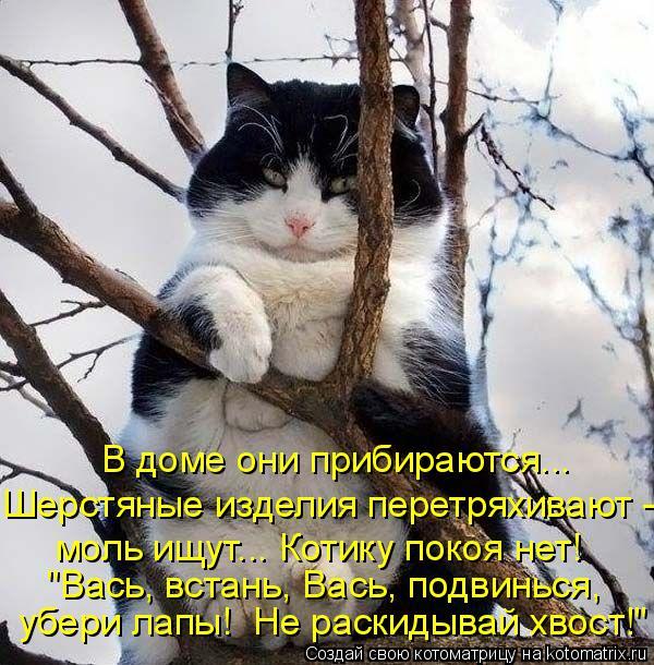 """Котоматрица: В доме они прибираются... Шерстяные изделия перетряхивают - моль ищут... Котику покоя нет! """"Вась, встань, Вась, подвинься, убери лапы!  Не раскид"""