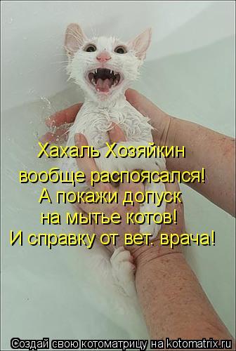 Котоматрица: Хахаль Хозяйкин  вообще распоясался! А покажи допуск  на мытье котов! И справку от вет. врача!