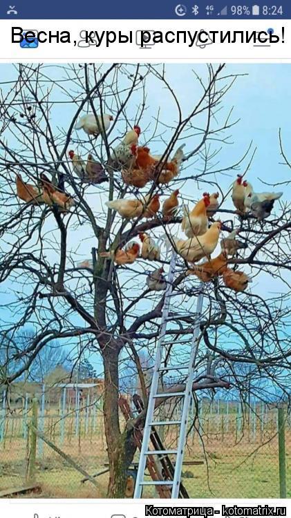 Котоматрица: Весна, куры распустились!