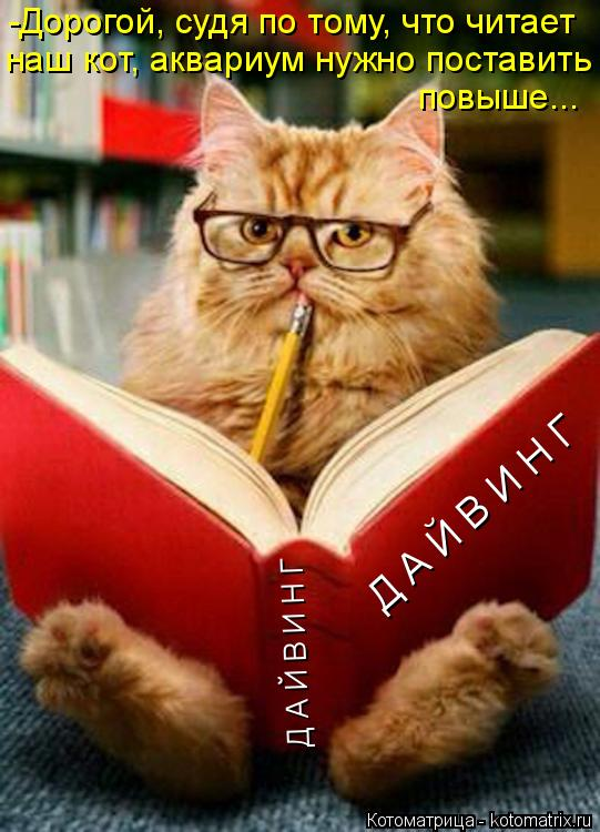 Котоматрица: Д А Й В И Н Г -Дорогой, судя по тому, что читает наш кот, аквариум нужно поставить повыше... Д А Й В И Н Г
