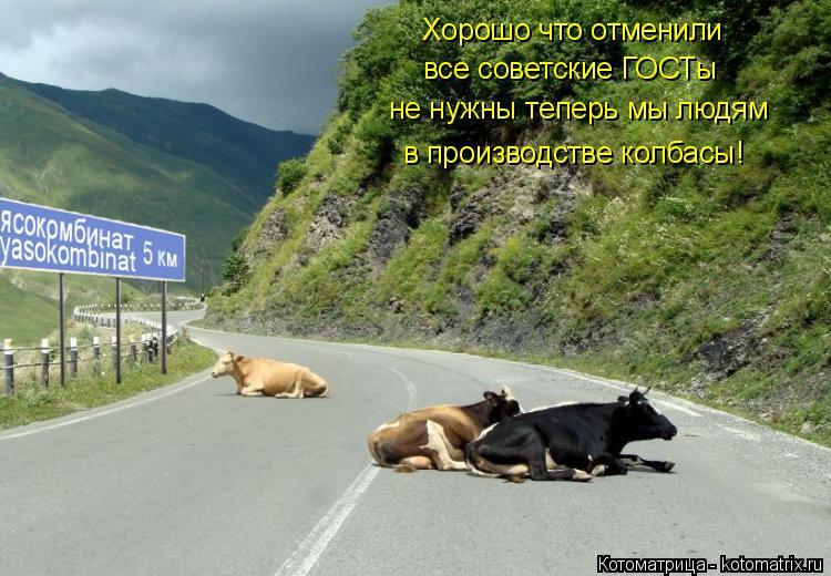 Котоматрица: Хорошо что отменили все советские ГОСТы не нужны теперь мы людям в производстве колбасы!