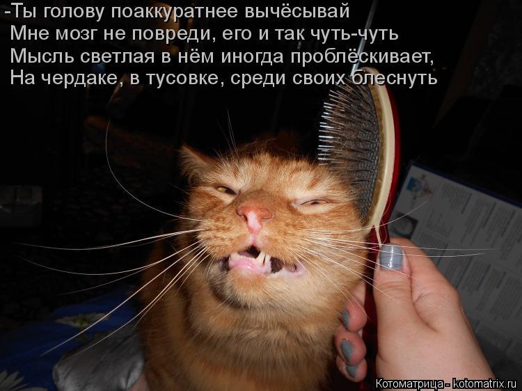 Котоматрица: -Ты голову поаккуратнее вычёсывай Мне мозг не повреди, его и так чуть-чуть Мысль светлая в нём иногда проблёскивает,  На чердаке, в тусовке, с