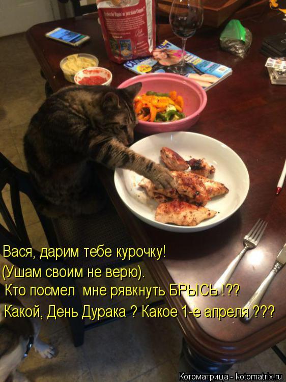 Котоматрица: Вася, дарим тебе курочку! Кто посмел  мне рявкнуть БРЫСЬ !?? (Ушам своим не верю). Какой, День Дурака ? Какое 1-е апреля ???