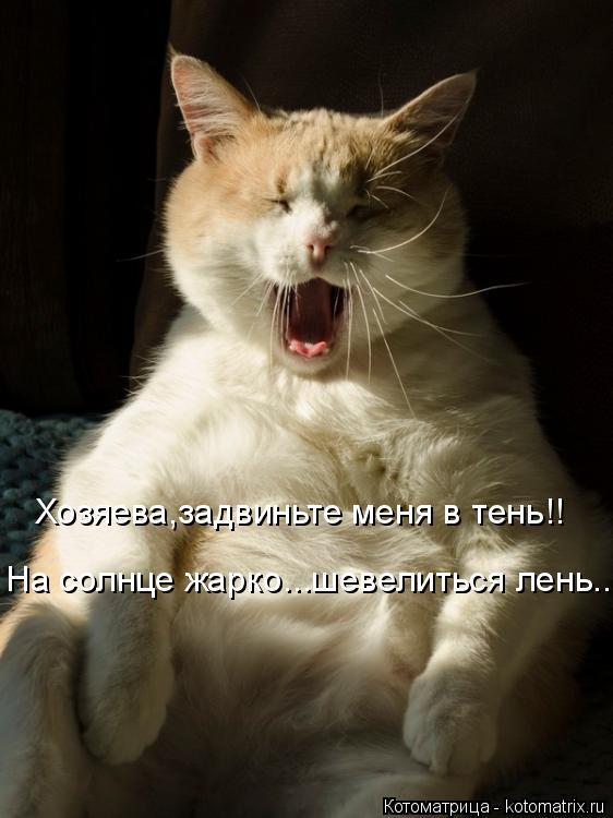 Котоматрица: Хозяева,задвиньте меня в тень!! На солнце жарко...шевелиться лень...