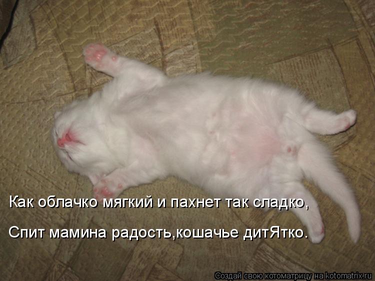 Котоматрица: Как облачко мягкий и пахнет так сладко, Спит мамина радость,кошачье дитЯтко.