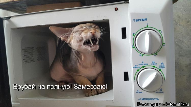 Котоматрица: Врубай на полную! Замерзаю!