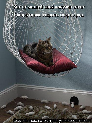 Котоматрица: Кот от мышей свой получил откат Теперь глаза закрыть скорее рад