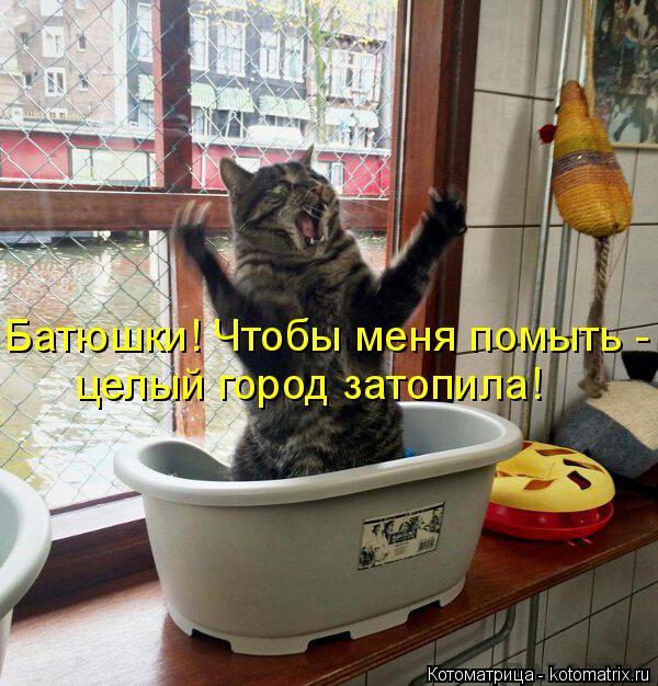 Котоматрица: Батюшки! Чтобы меня помыть - целый город затопила!