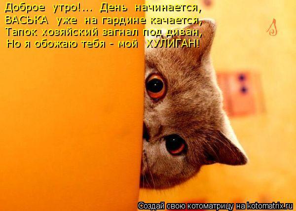 Котоматрица: Доброе  утро!...  День  начинается, ВАСЬКА  уже  на гардине качается, Тапок хозяйский загнал под диван, Но я обожаю тебя - мой  ХУЛИГАН!