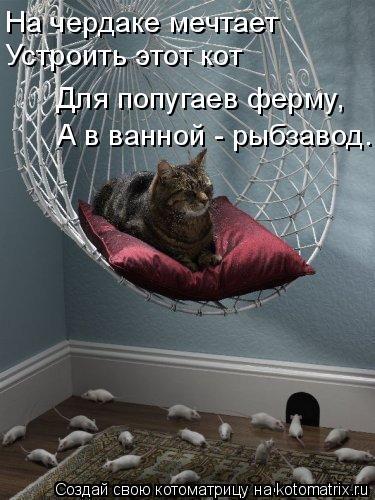 Котоматрица: На чердаке мечтает Устроить этот кот Для попугаев ферму, А в ванной - рыбзавод.