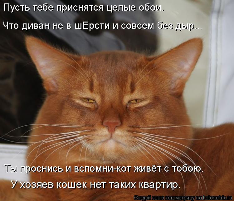 Котоматрица: Пусть тебе приснятся целые обои.  Ты проснись и вспомни-кот живёт с тобою. У хозяев кошек нет таких квартир. Что диван не в шЕрсти и совсем бе?