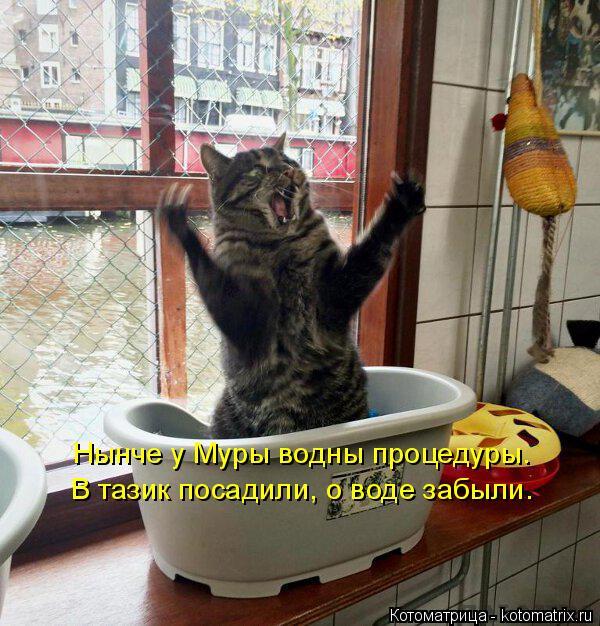 Котоматрица: Нынче у Муры водны процедуры. В тазик посадили, о воде забыли.