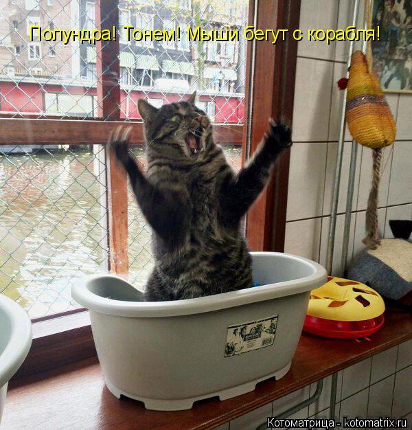 Котоматрица: Полундра! Тонем! Мыши бегут с корабля!