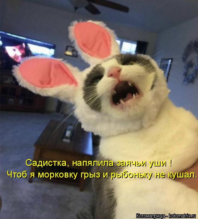 Котоматрица: Садистка, напялила заячьи уши ! Чтоб я морковку грыз и рыбоньку не кушал.
