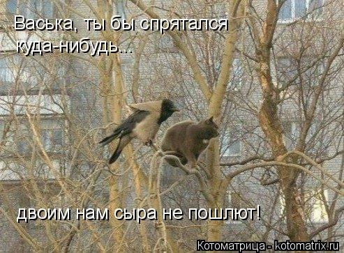 Котоматрица: Васька, ты бы спрятался  куда-нибудь... двоим нам сыра не пошлют!