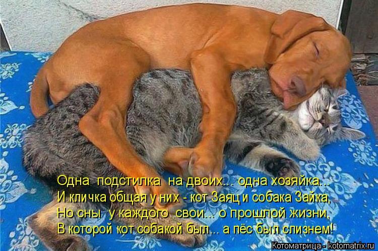 Котоматрица: Одна  подстилка  на двоих... одна хозяйка...  И кличка общая у них - кот Заяц и собака Зайка, Но сны  у каждого  свои... о прошлой жизни, В которой к?