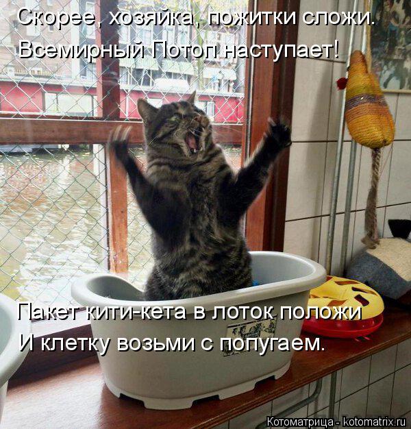 Котоматрица: Скорее, хозяйка, пожитки сложи. Всемирный Потоп наступает! Пакет кити-кета в лоток положи  И клетку возьми с попугаем.