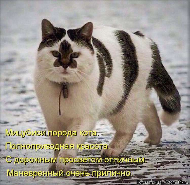 Котоматрица: Мицубиси порода кота. Полноприводная красота. С дорожным просветом отличным. Маневренный очень прилично.