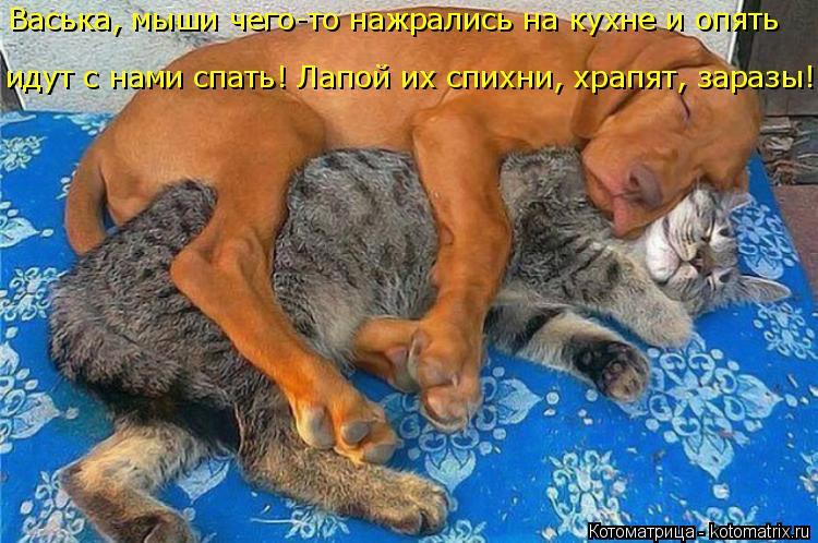 Котоматрица: Васька, мыши чего-то нажрались на кухне и опять идут с нами спать! Лапой их спихни, храпят, заразы!