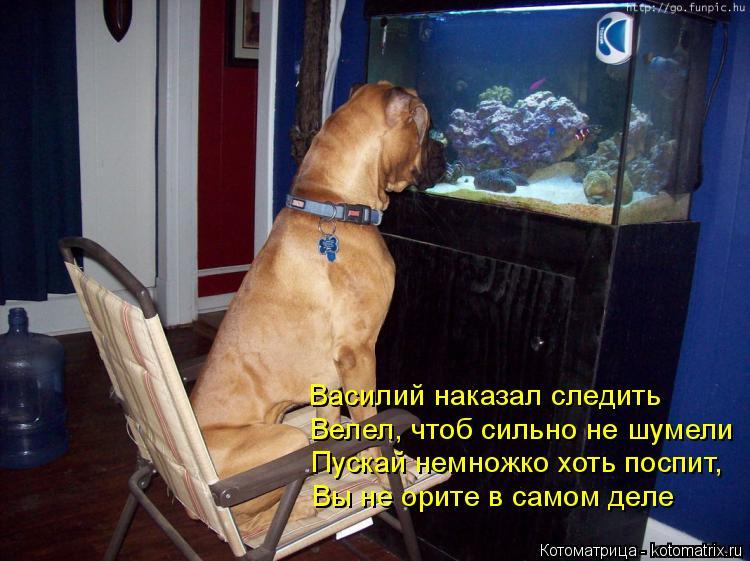 Котоматрица: Василий наказал следить Велел, чтоб сильно не шумели Пускай немножко хоть поспит, Вы не орите в самом деле