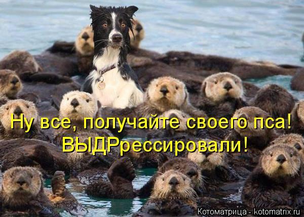 Котоматрица: Ну все, получайте своего пса! ВЫДРрессировали!