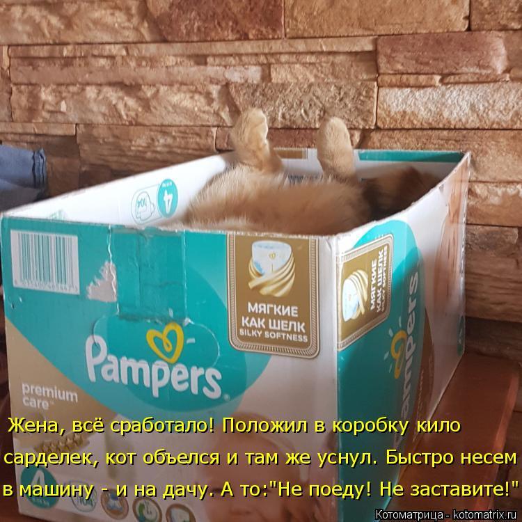 """Котоматрица: Жена, всё сработало! Положил в коробку кило  сарделек, кот объелся и там же уснул. Быстро несем в машину - и на дачу. А то:""""Не поеду! Не заставит?"""