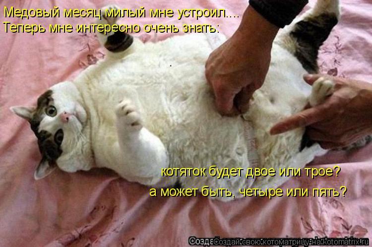 Котоматрица: Медовый месяц милый мне устроил.... Теперь мне интересно очень знать: котяток будет двое или трое? а может быть, четыре или пять?