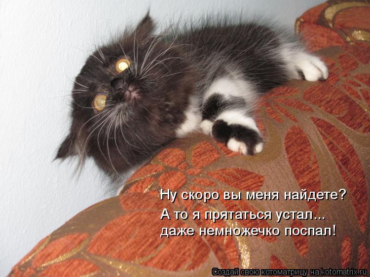 Котоматрица: Ну скоро вы меня найдете? А то я прятаться устал... даже немножечко поспал!