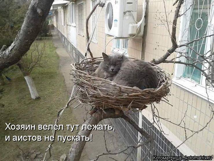 Котоматрица: Хозяин велел тут лежать,  и аистов не пускать!