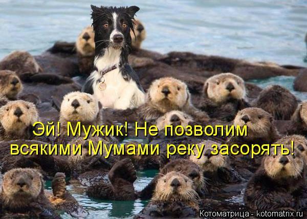 Котоматрица: Эй! Мужик! Не позволим всякими Мумами реку засорять!