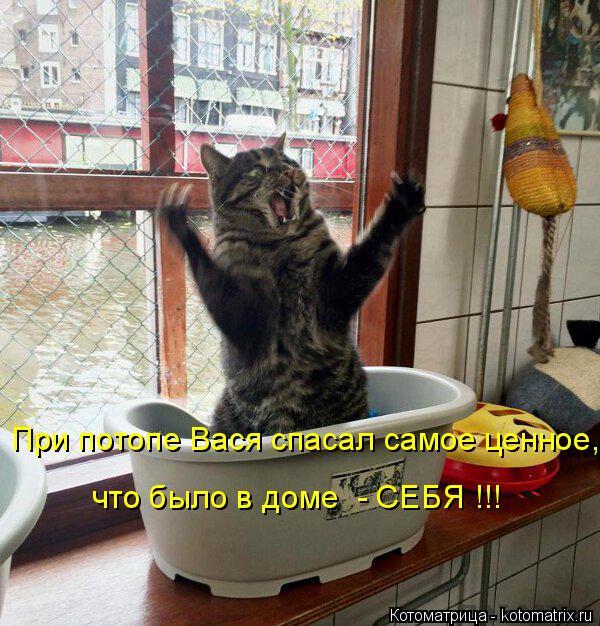 Котоматрица: При потопе Вася спасал самое ценное, что было в доме  - СЕБЯ !!!