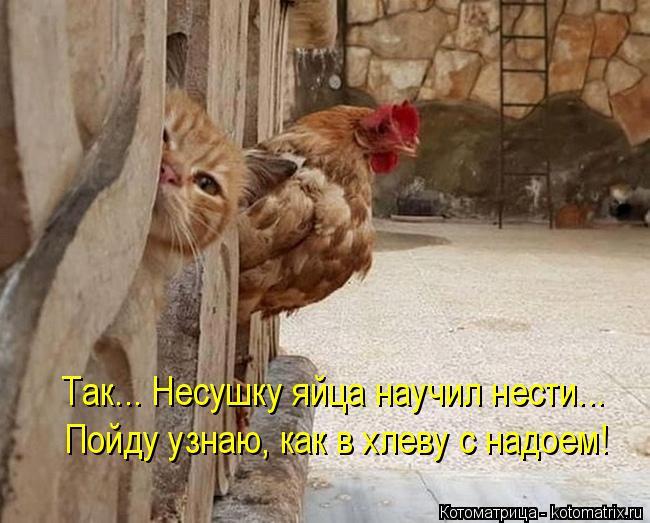 Котоматрица: Так... Несушку яйца научил нести... Пойду узнаю, как в хлеву с надоем!