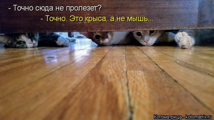 Котоматрица: - Точно сюда не пролезет? - Точно. Это крыса, а не мышь...