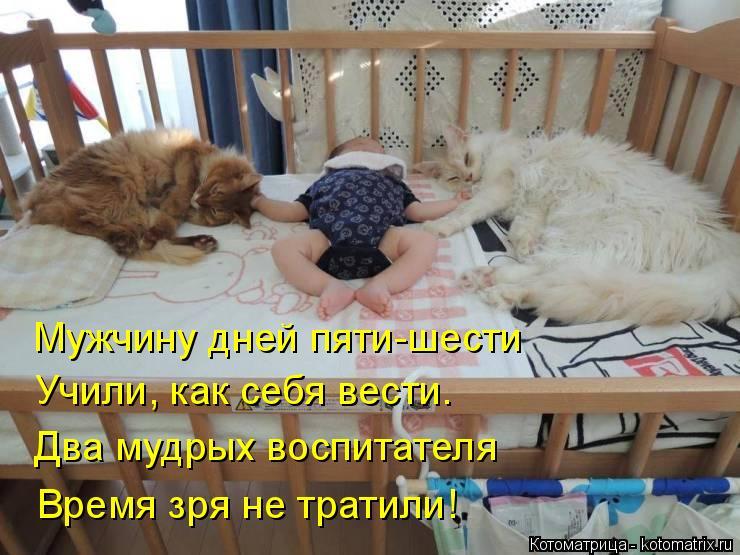 Котоматрица: Мужчину дней пяти-шести Учили, как себя вести. Два мудрых воспитателя Время зря не тратили!