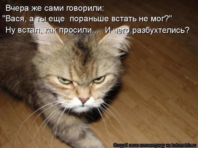 """Котоматрица: Вчера же сами говорили:  """"Вася, а ты еще  пораньше встать не мог?"""" Ну встал, как просили... И чего разбухтелись?"""