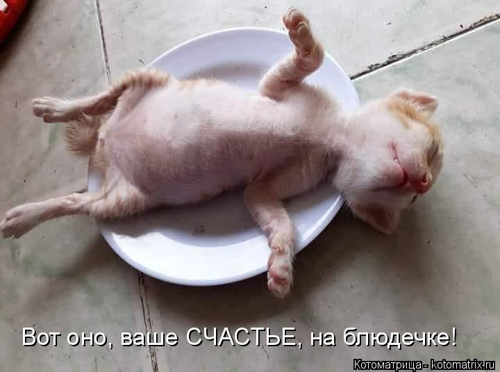 Котоматрица: Вот оно, ваше СЧАСТЬЕ, на блюдечке!