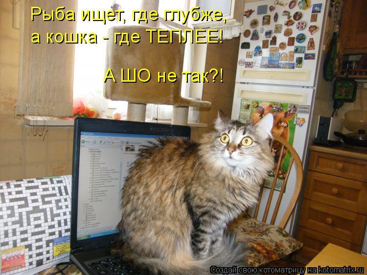 Котоматрица: Рыба ищет, где глубже, а кошка - где ТЕПЛЕЕ! А ШО не так?!
