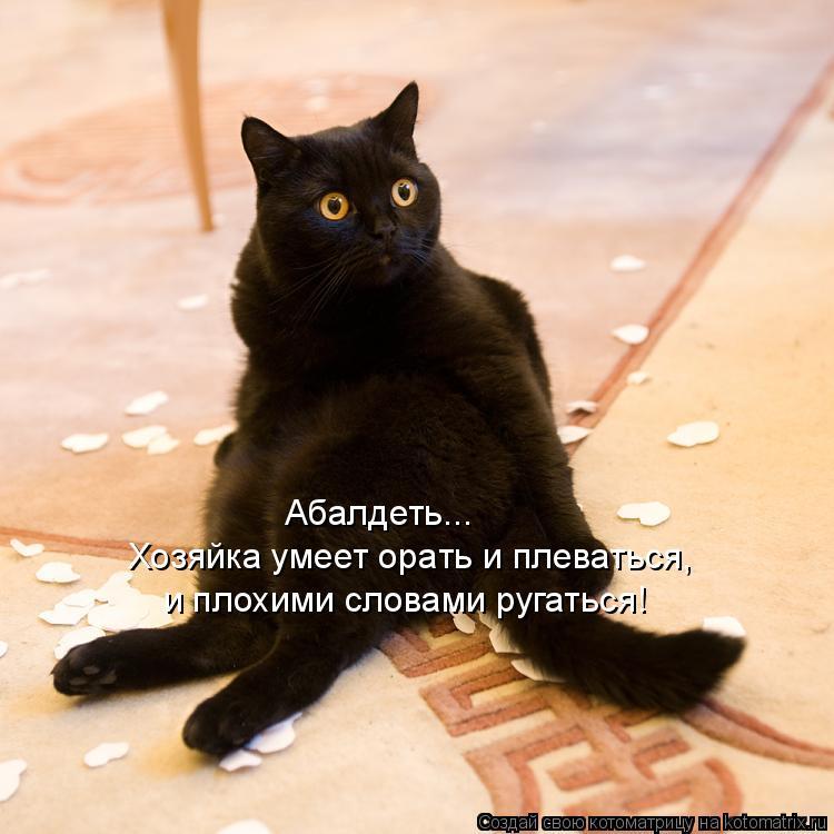 Котоматрица: Абалдеть... Хозяйка умеет орать и плеваться, и плохими словами ругаться!
